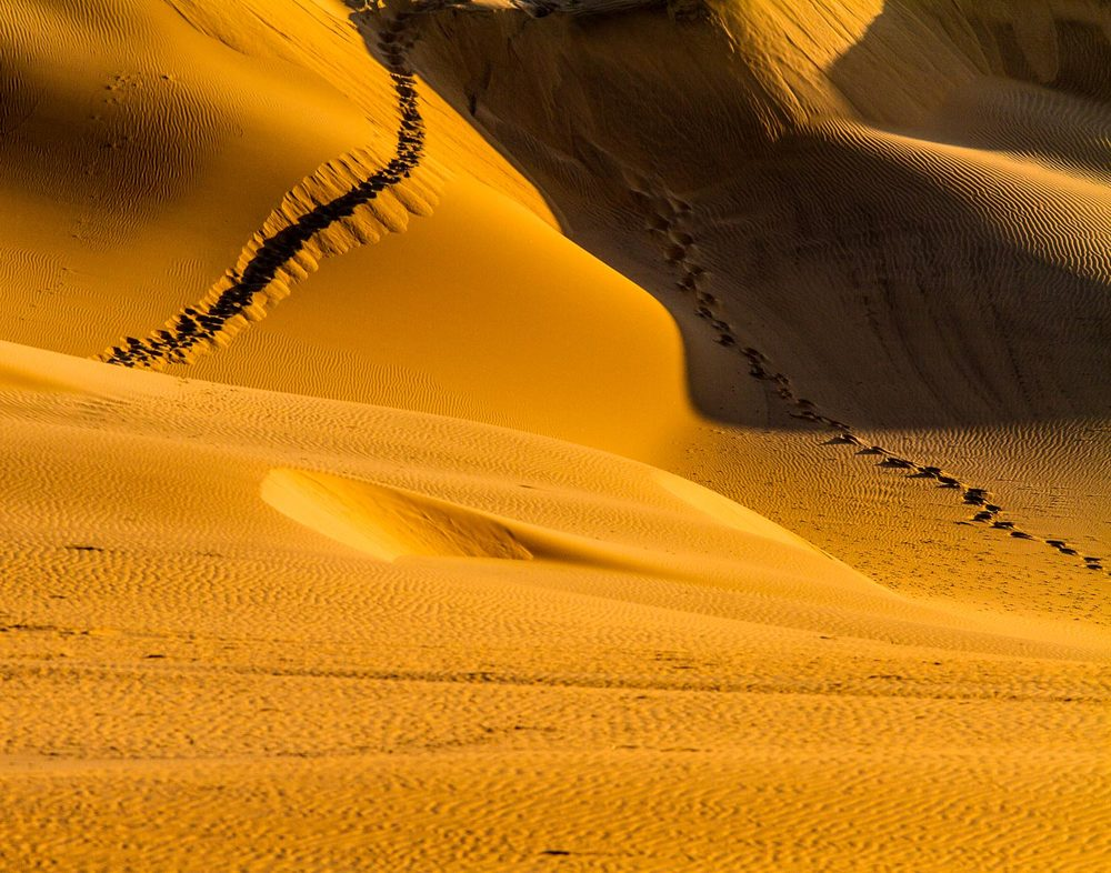 Oryx Tracks on the Dunes
