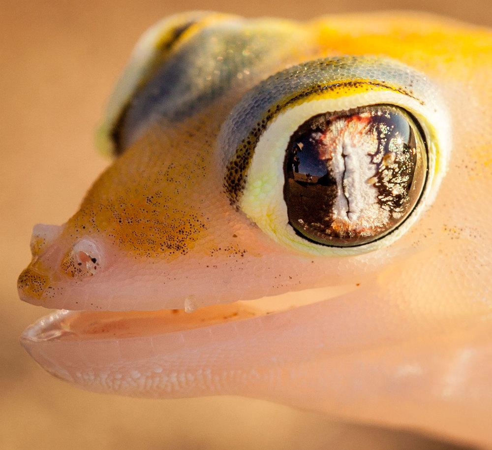 Geiko Eye