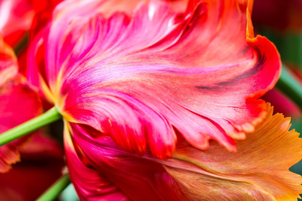 flower-petal-art