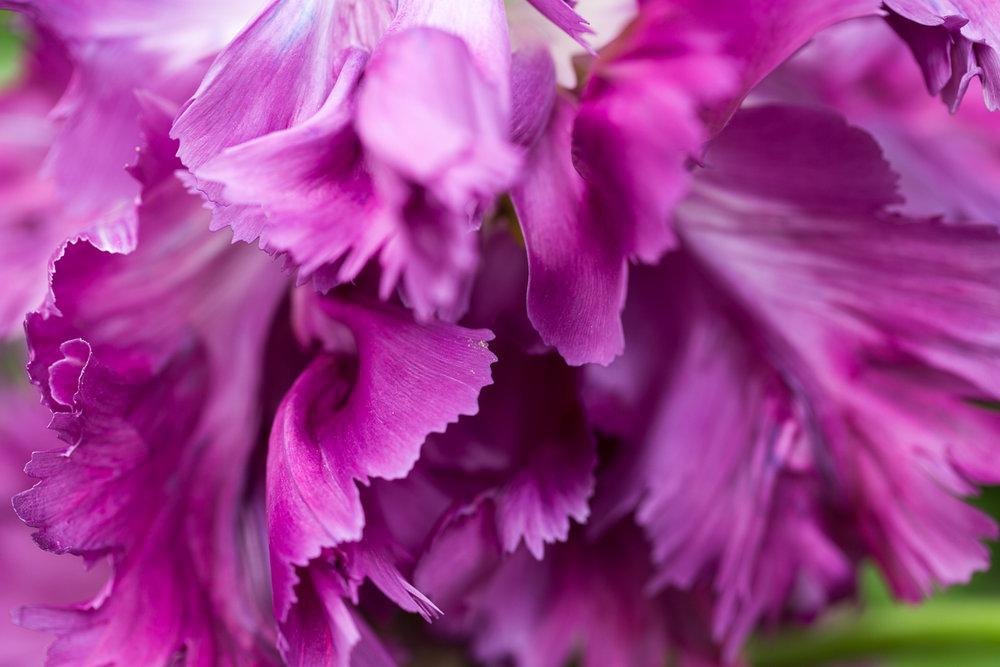 flower-petal-art-work
