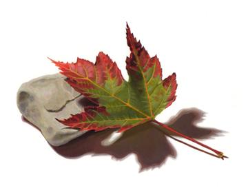 Leaf Meets Rock