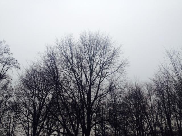 Grey sky.jpg