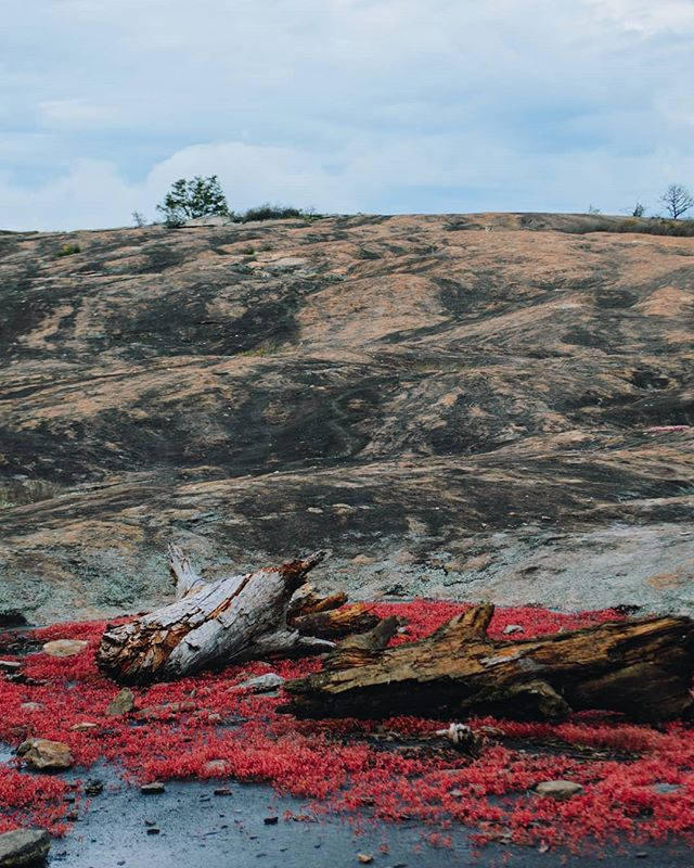 Arabia Mountain feels like another planet, especially in the spring when it's in bloom.  #arabiamountain #flowers #mountain #explorega #exploregeorgia #barren #rocky #georgia #moodygrams #nikon