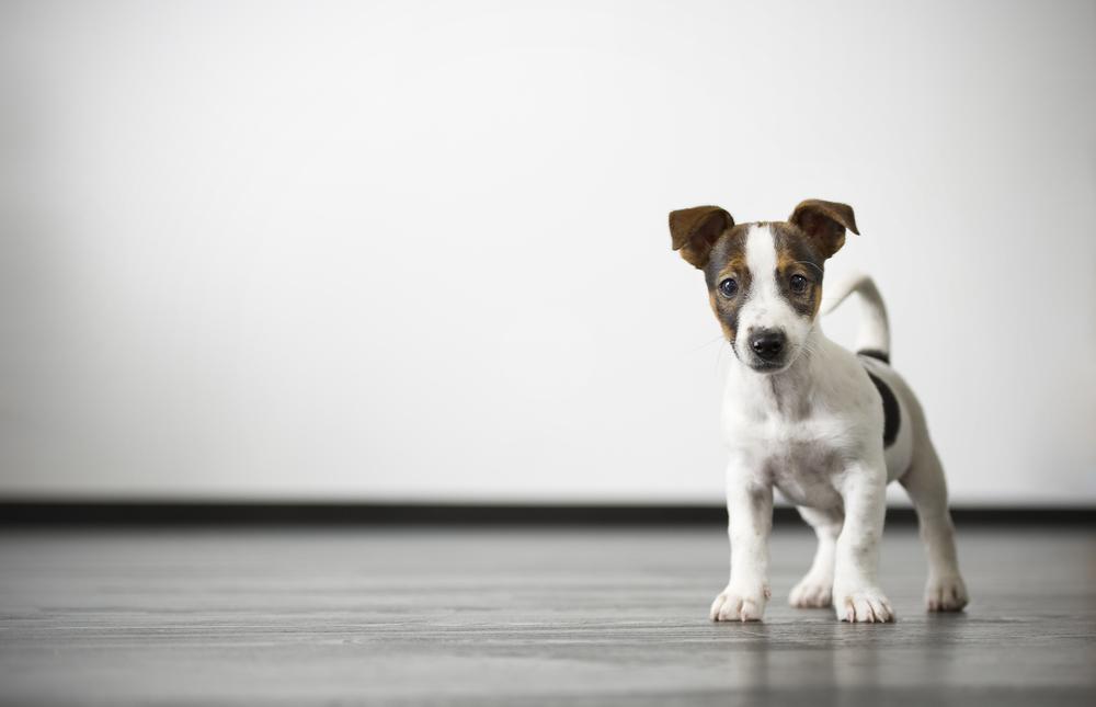 wk website dog on white.jpg