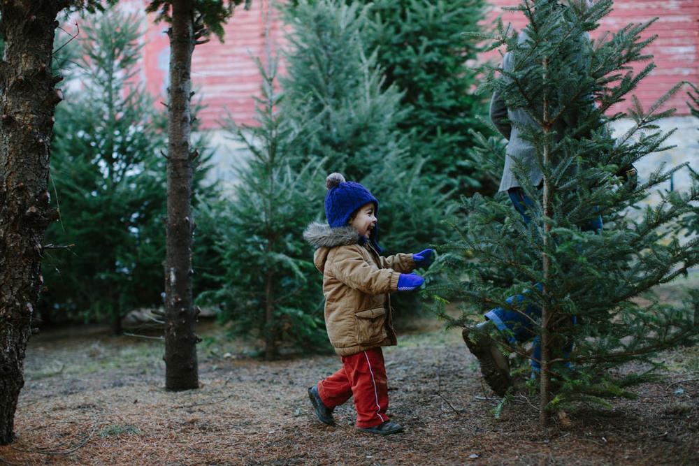 O Christmas Tree-13.jpg