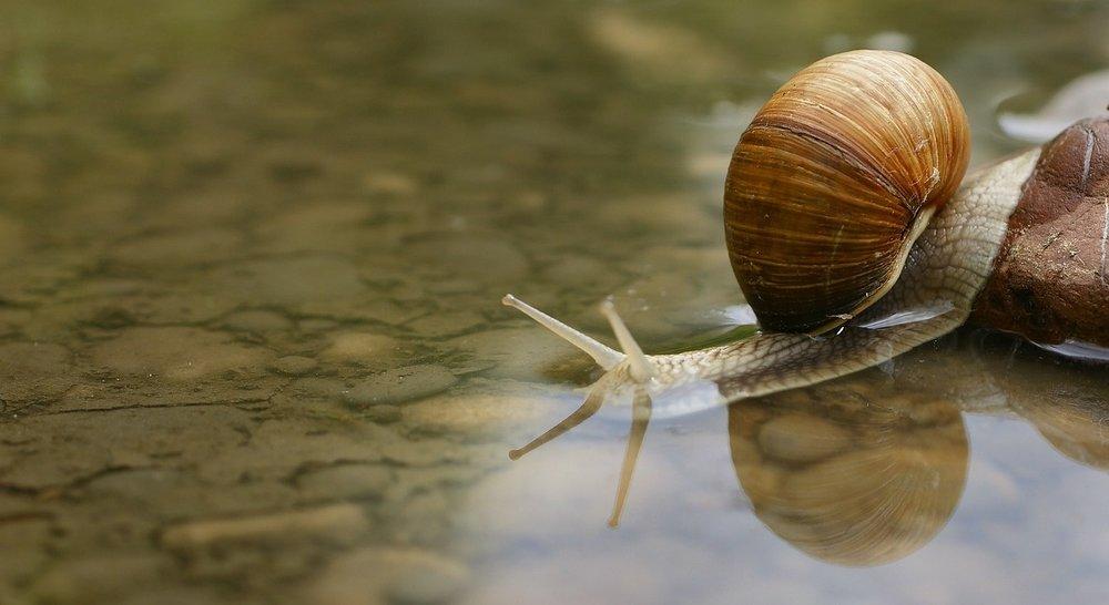 snail-187559_1280.jpg
