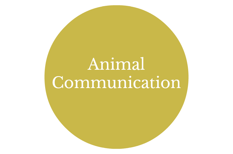 Animal Communicator Washington State