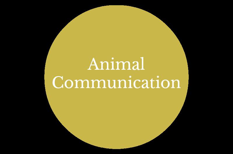 Animal Communicator Washington State