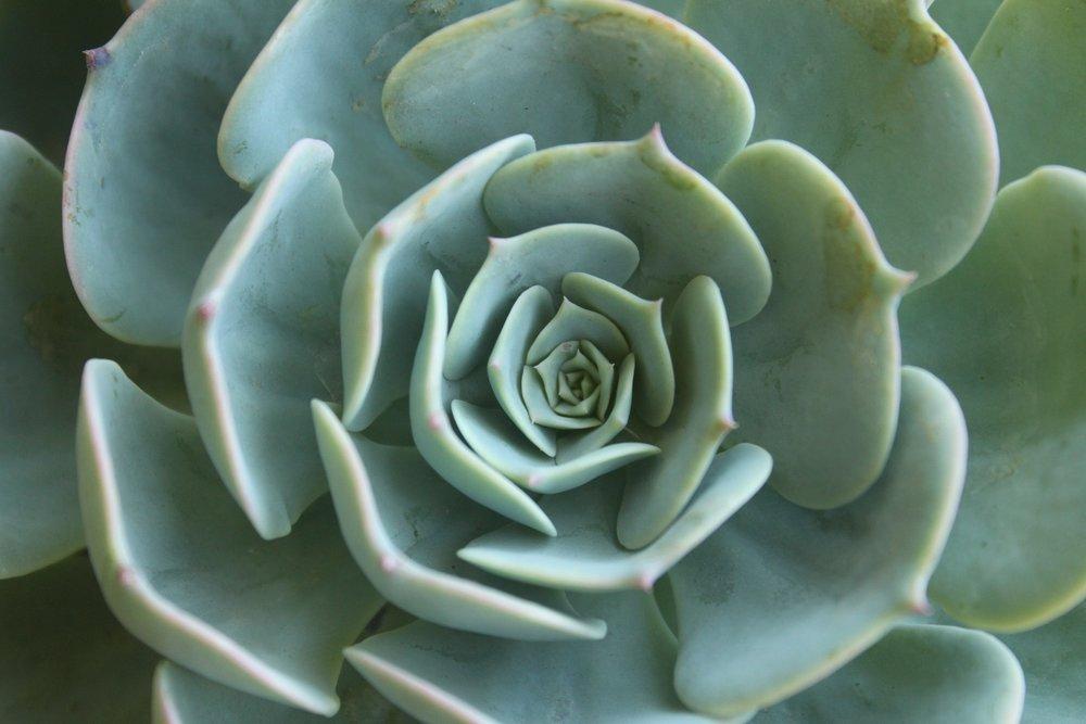 succulent-2763668_1920.jpg