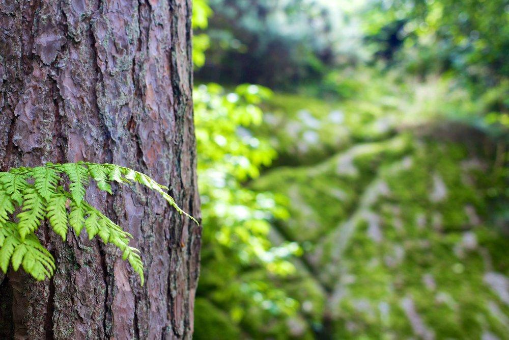 bark-forest-tree-4587.jpg