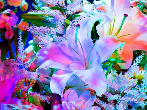 electric_blossom_1123.jpg?format=500w