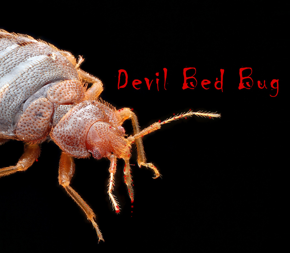 Devil Bed Bug Monster Found Happy Halloween Bed Bug Mutts
