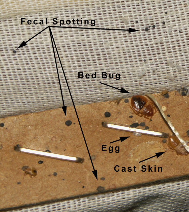 Better Bed Bug Blog Information Canadian News Bed Bug Products
