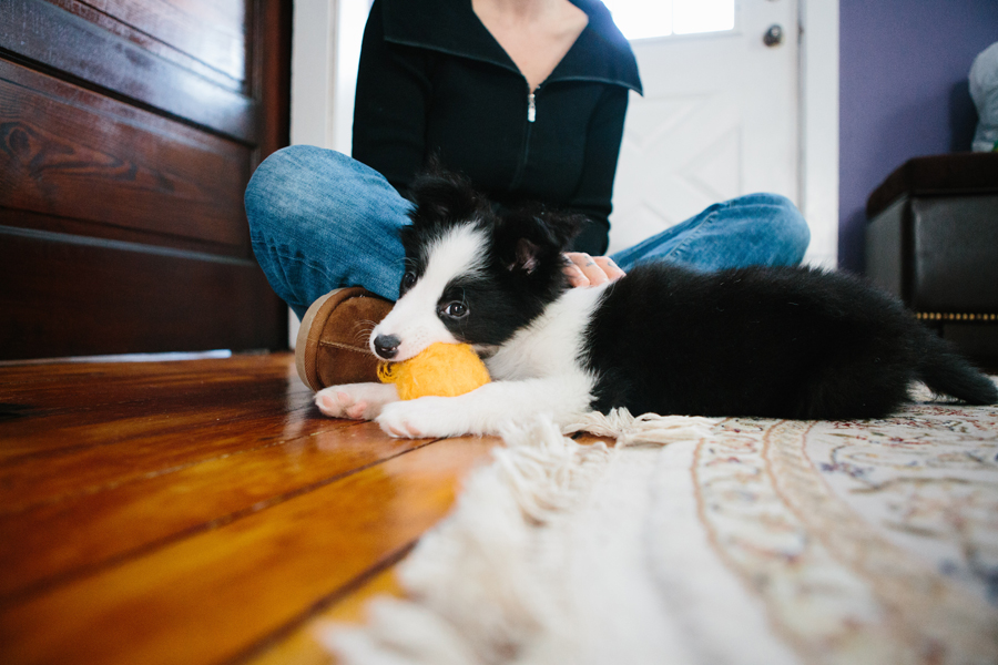 Cleveland Border Collies.jpg