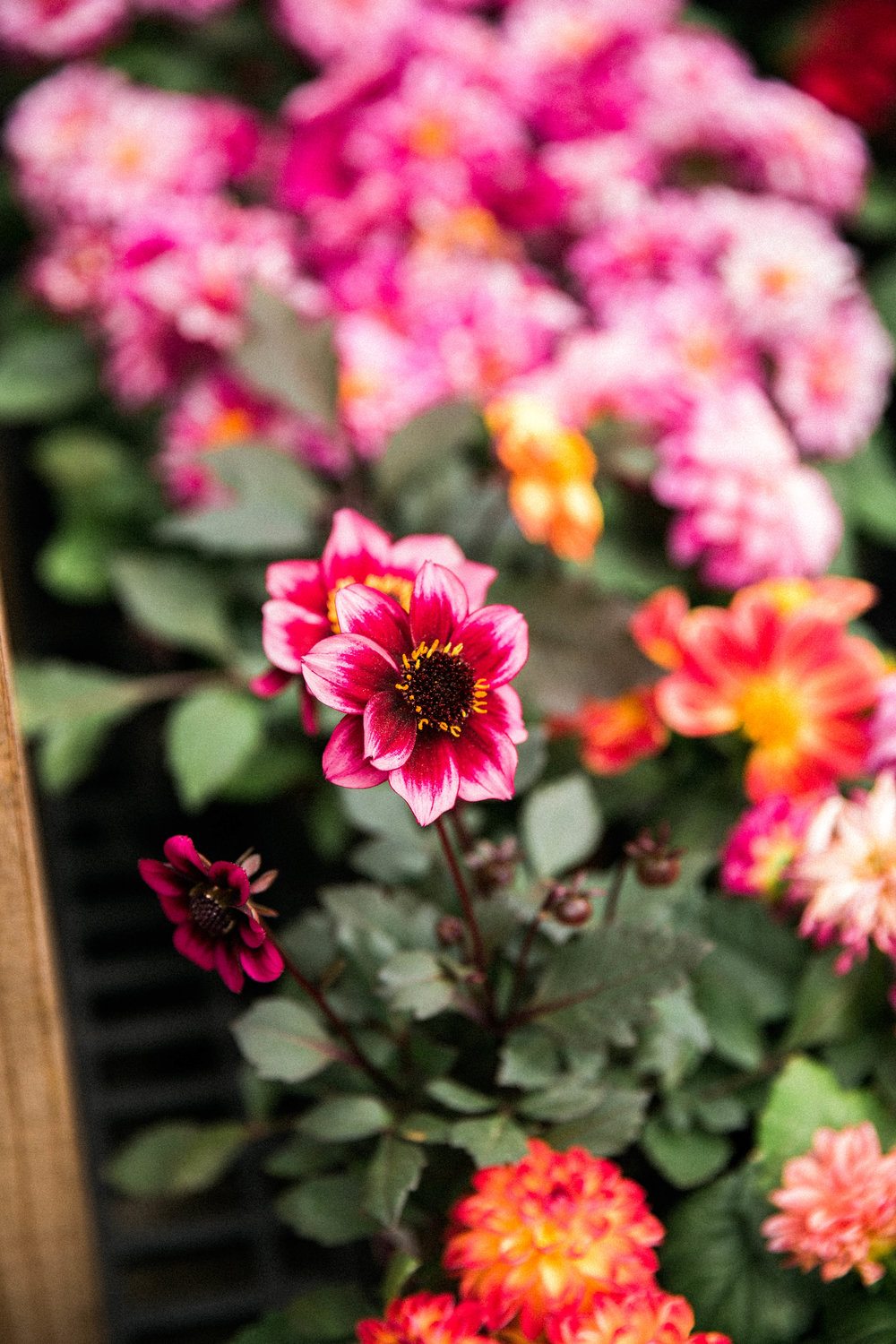 April 27, 2017_Lakewood-Garden-Center_027.jpg