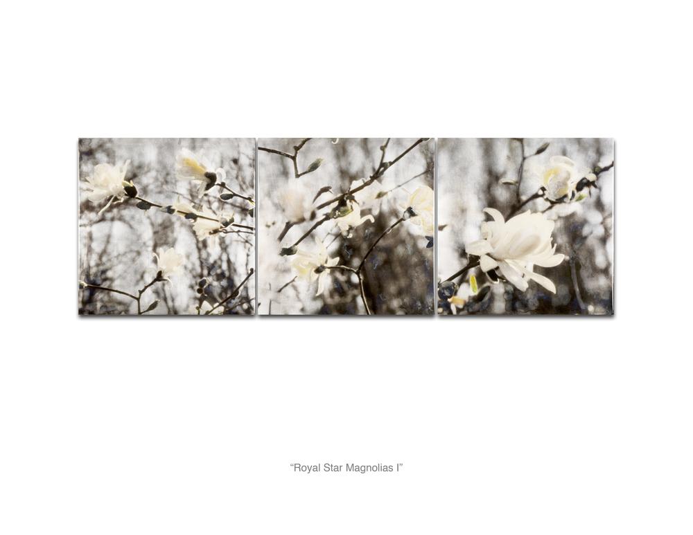 Royal Star Magnolias I_Web.jpg