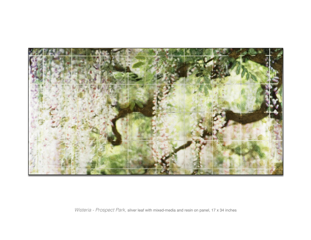 Wisteria-Prospect Park.jpg