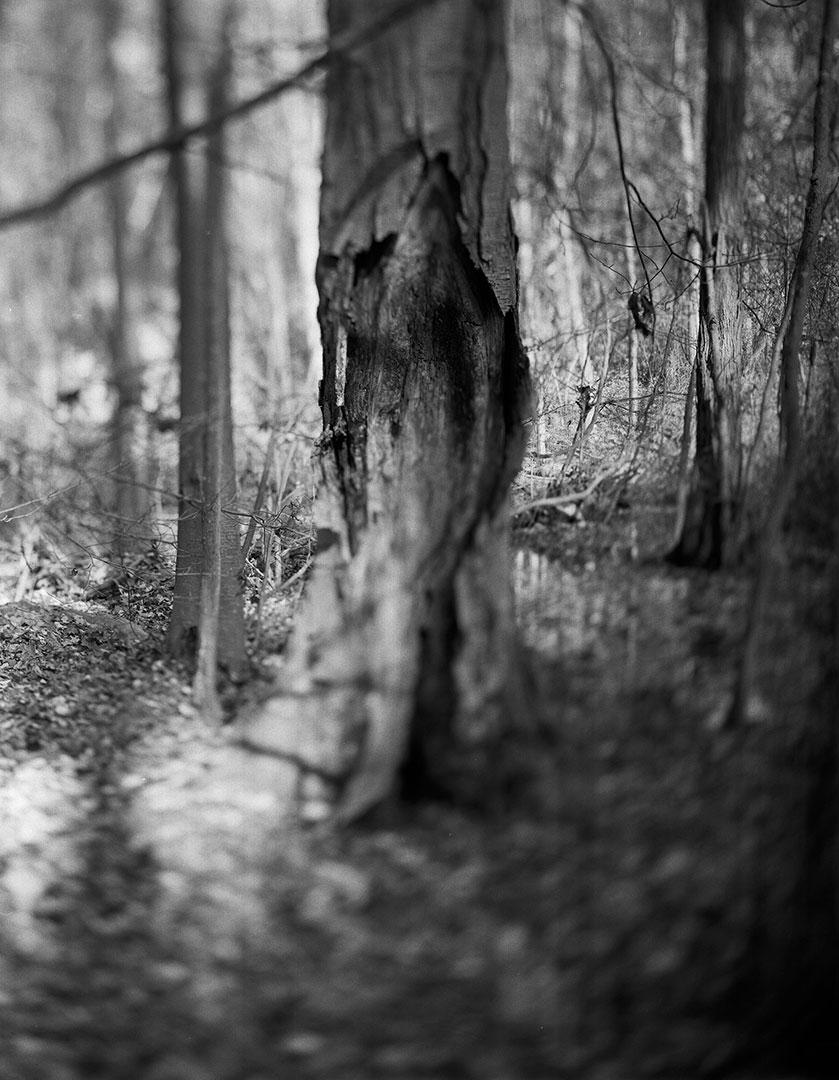 oldman-treeG.jpg