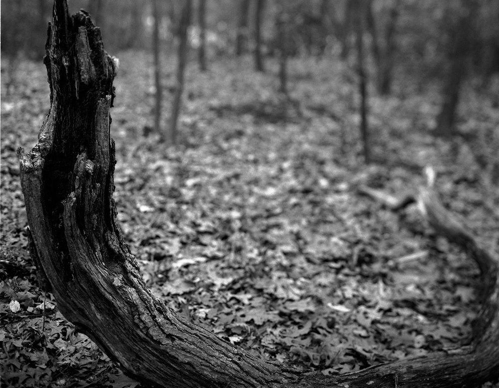 snake_stump.jpg
