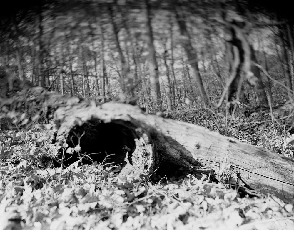 black-hole-treeG.jpg