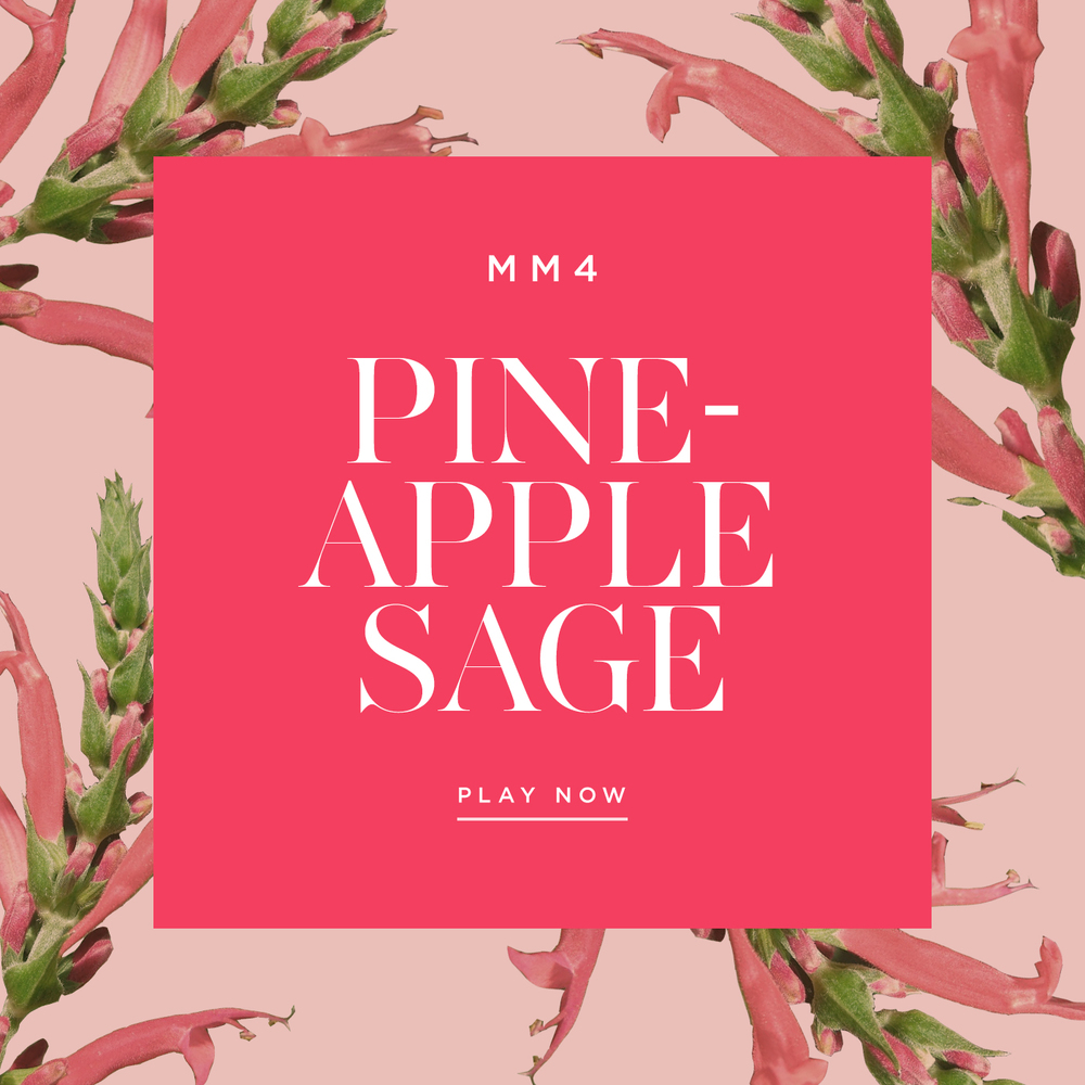 Pineapple-Sage-Cynthia-Mittweg-Music-Playlist-Maison-Mittweg
