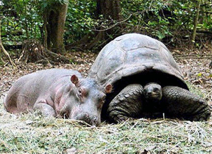Turtle and Hippo Getting Along