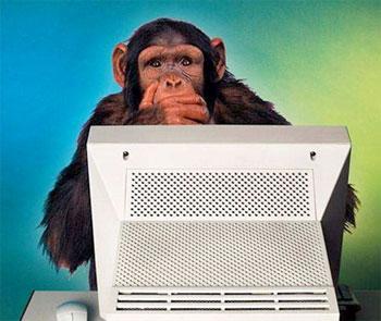 geek-monkey