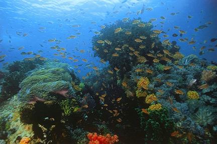 reefscape1.jpg