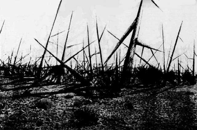 field-of-thorns.jpg
