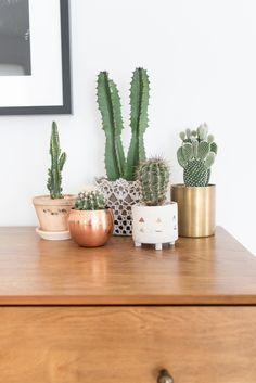 Kaunis pieni asetelma erilaisista kaktuksista. Kuva: Pinterest
