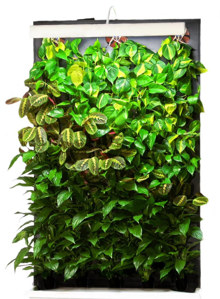 Trendikäs ja näyttäväviherseinä säästä tasotilaa. Kuva: Suomela