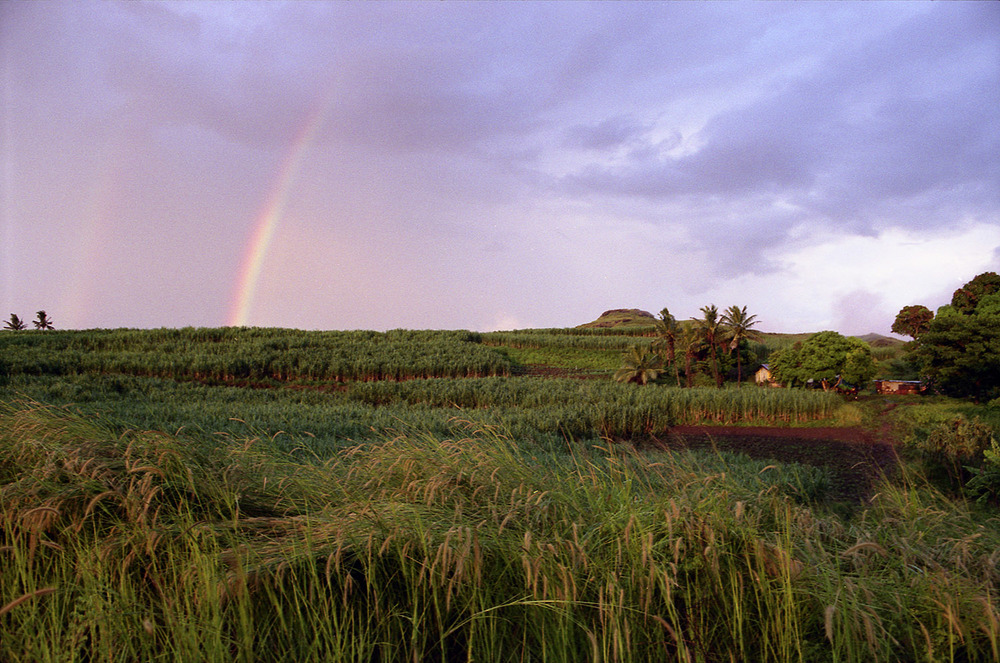 The Sugar Cane Belt