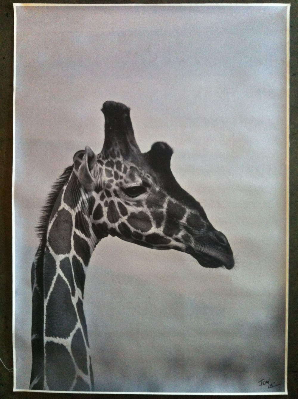 Giraffe Photo.JPG