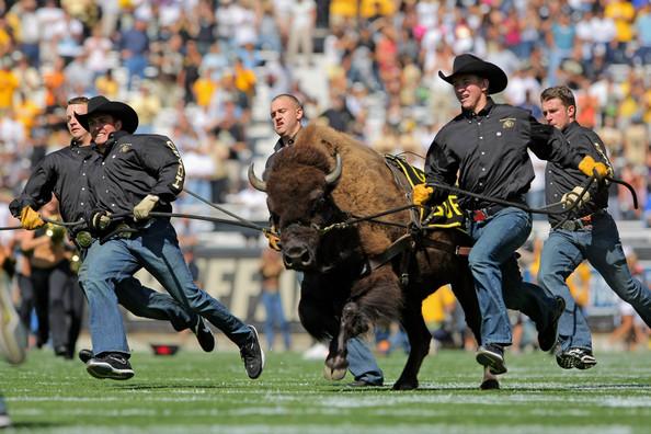 Ralphie Colorado Buffaloes.jpg