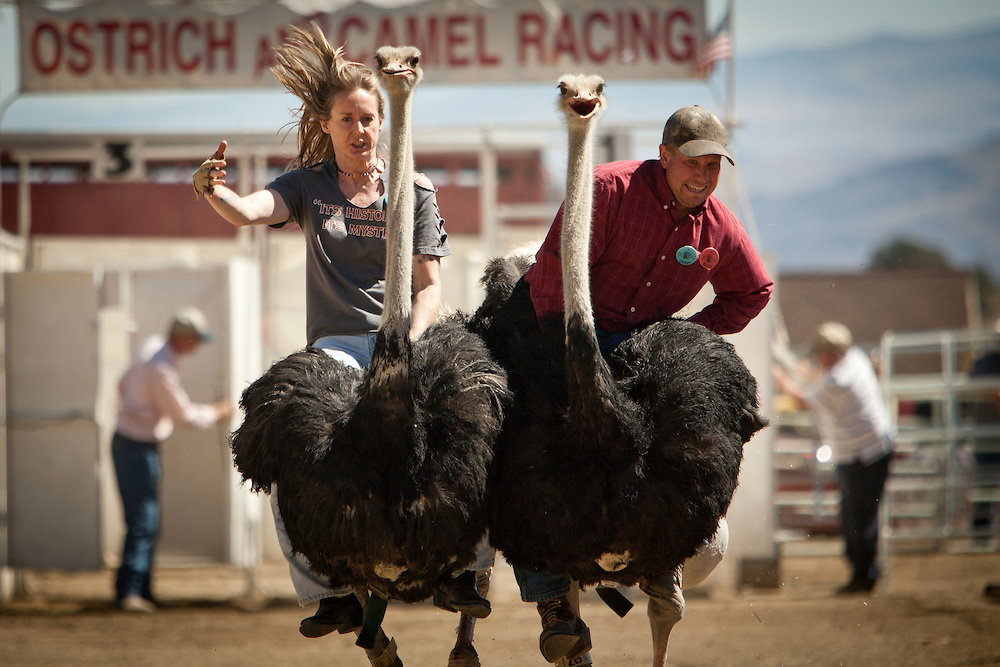 Ostrich Races Nevada