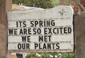 Spring Meme.jpg