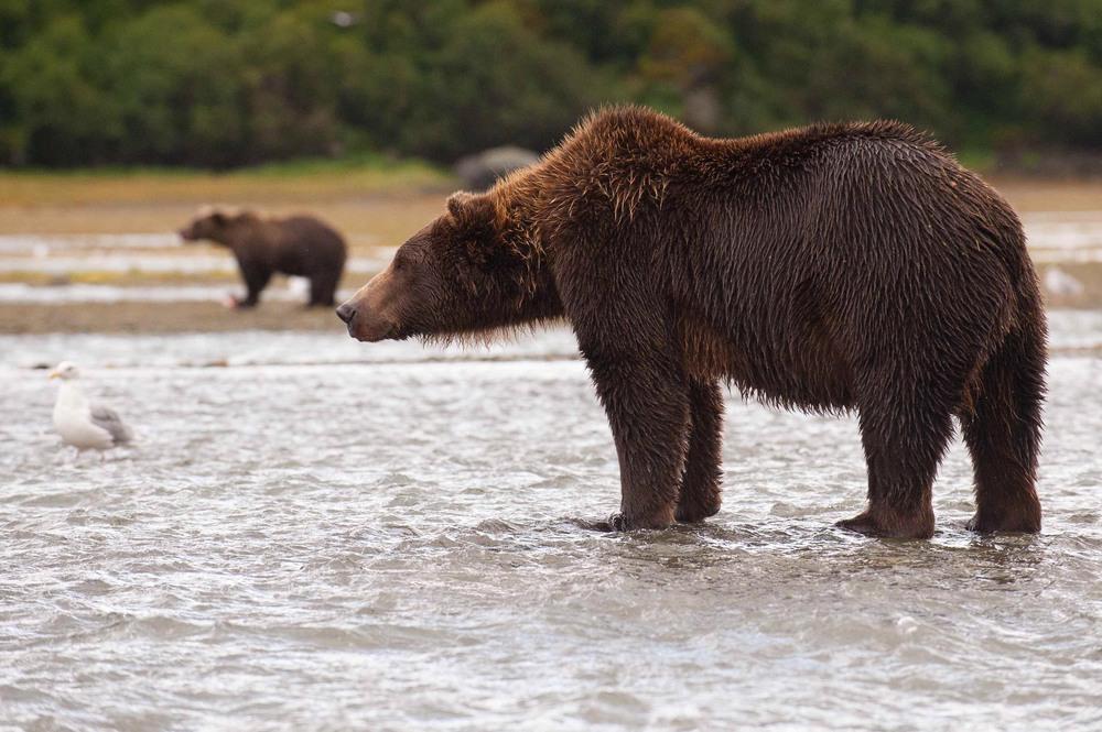 Alaska-25.jpg
