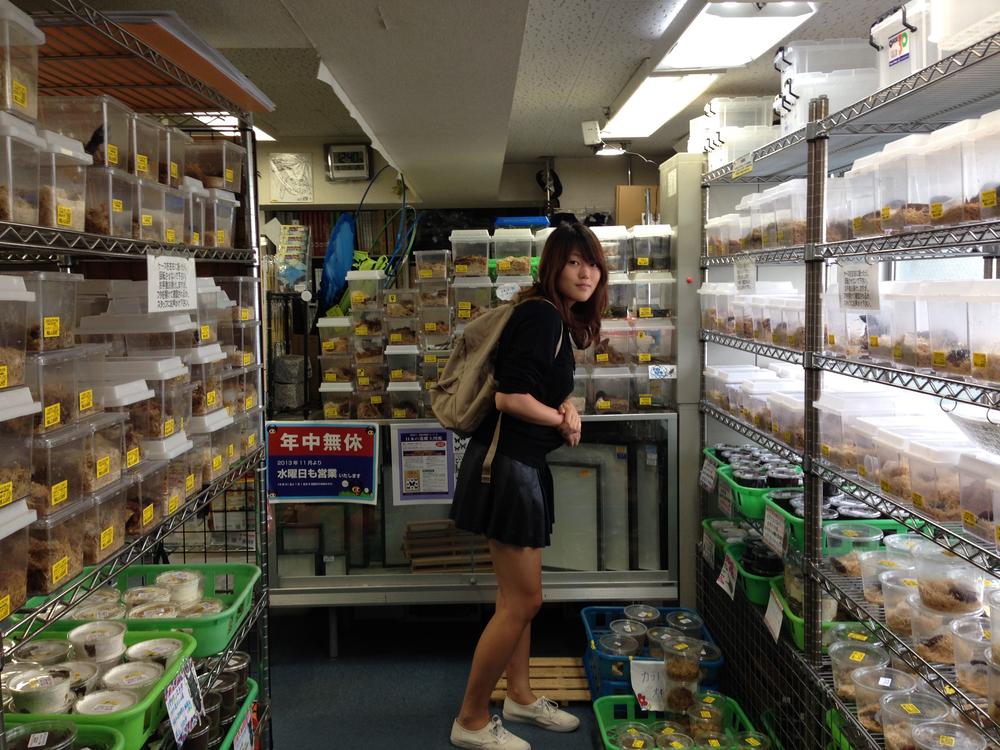 Japan beetle store.jpg