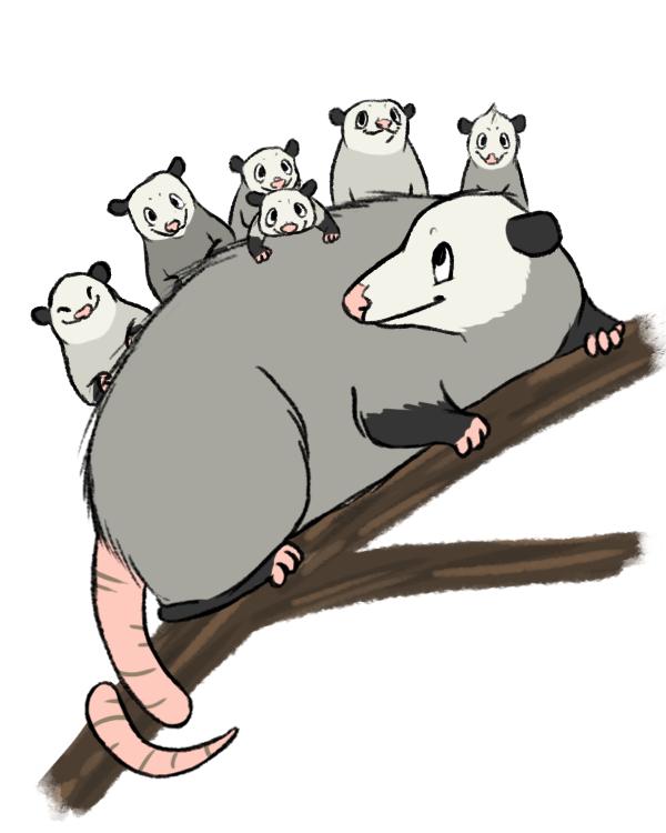 opossum color.png