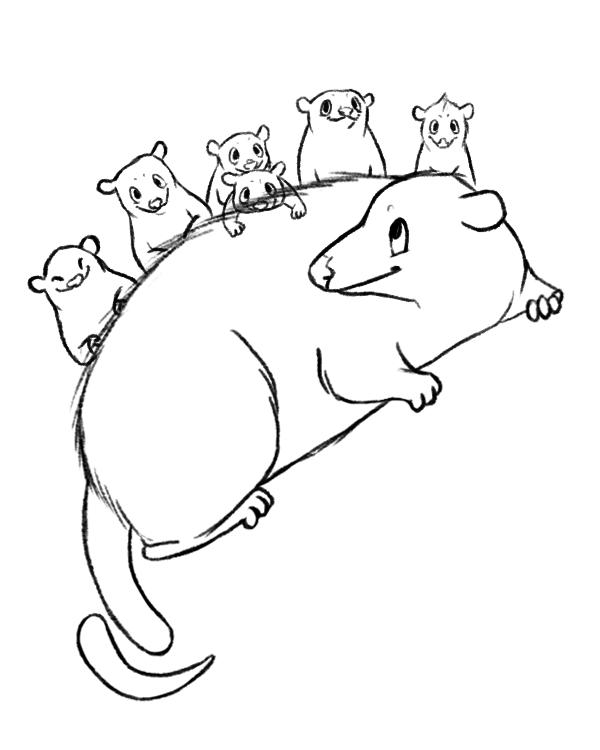 opossum line.png