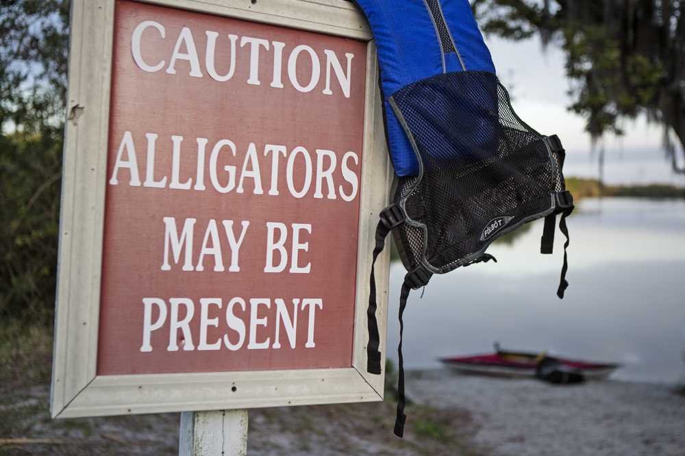 This sign is a lie, there were zero alligators present in Shell Creek