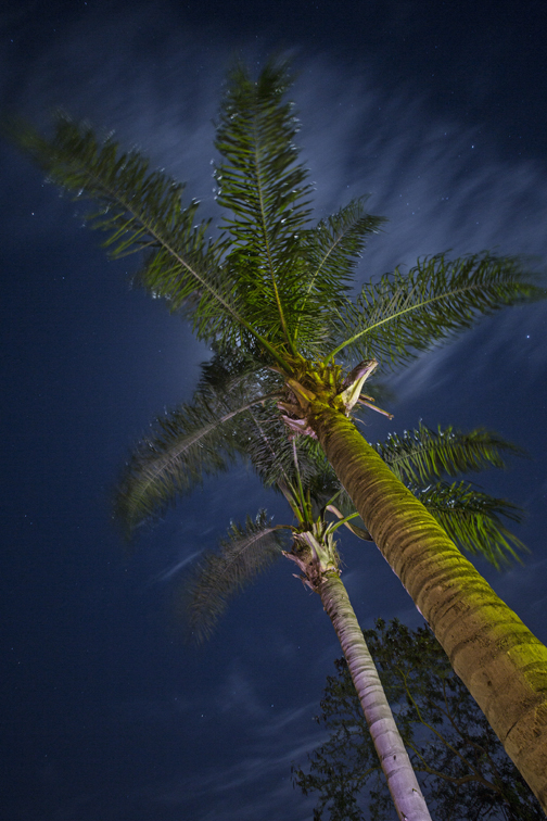 The full moon on Christmas, illuminating the sky behind the palms.