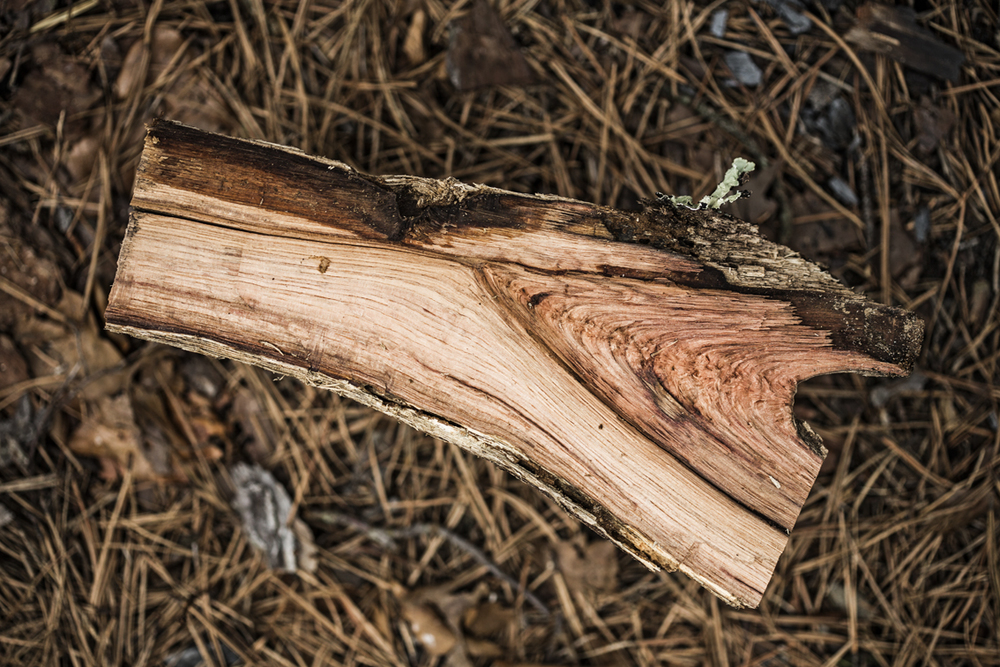 Patterns in a cedar log we split.