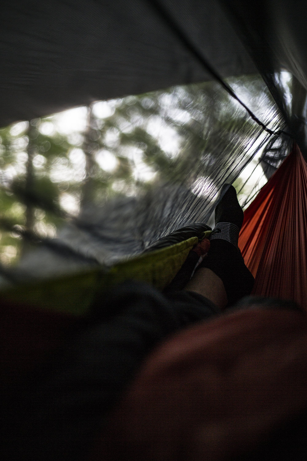 Sleepy morning hammock views.