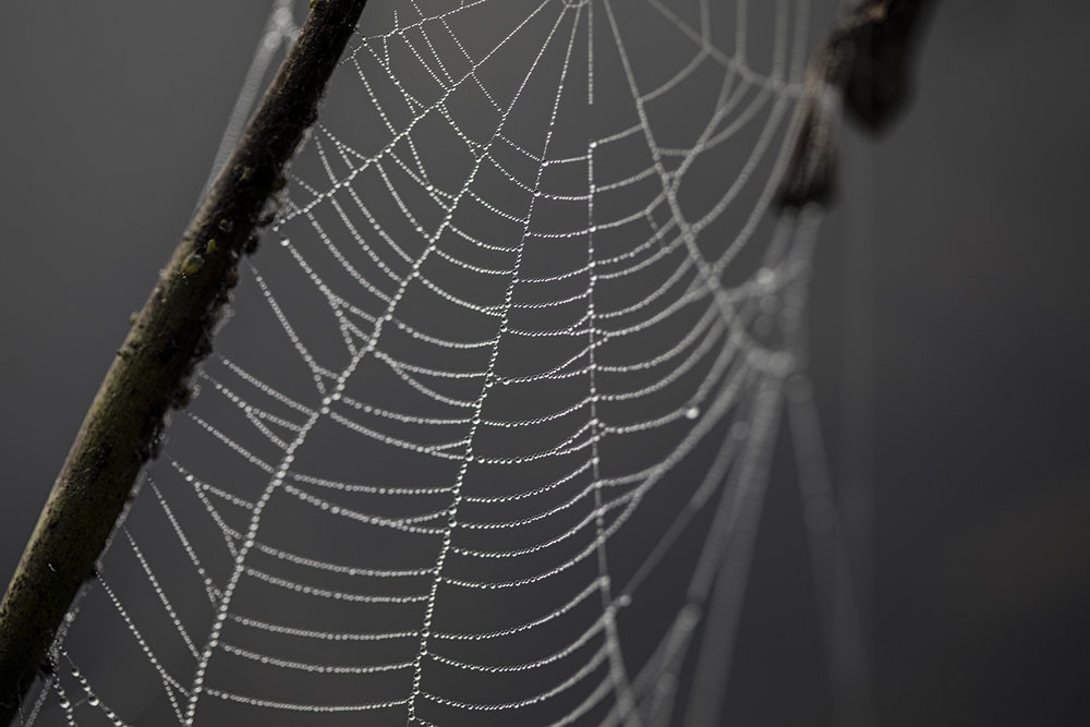 Dew drops and spiderwebs.