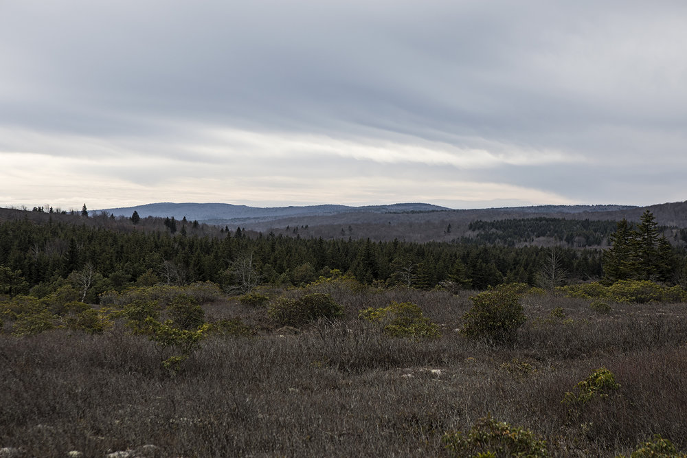 Looking into Dolly Sods from the bear rocks trail.