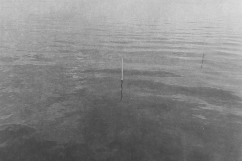 alone in the water.jpg