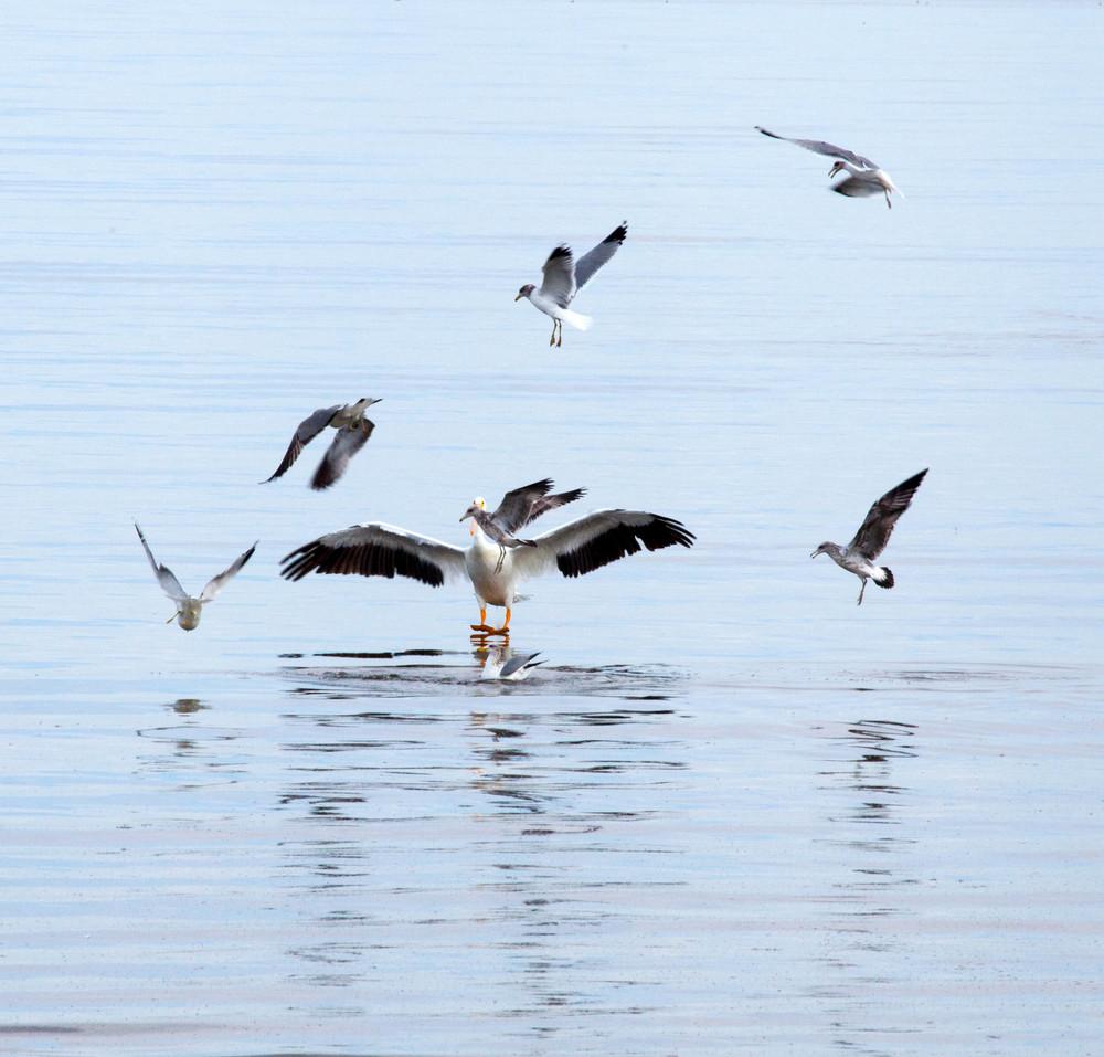 Salton Bird-4.jpg