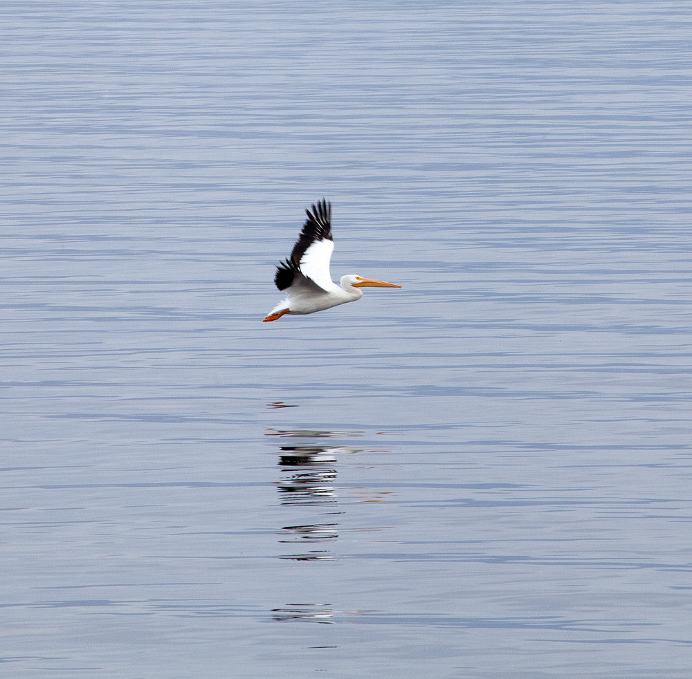Salton Bird-5.jpg