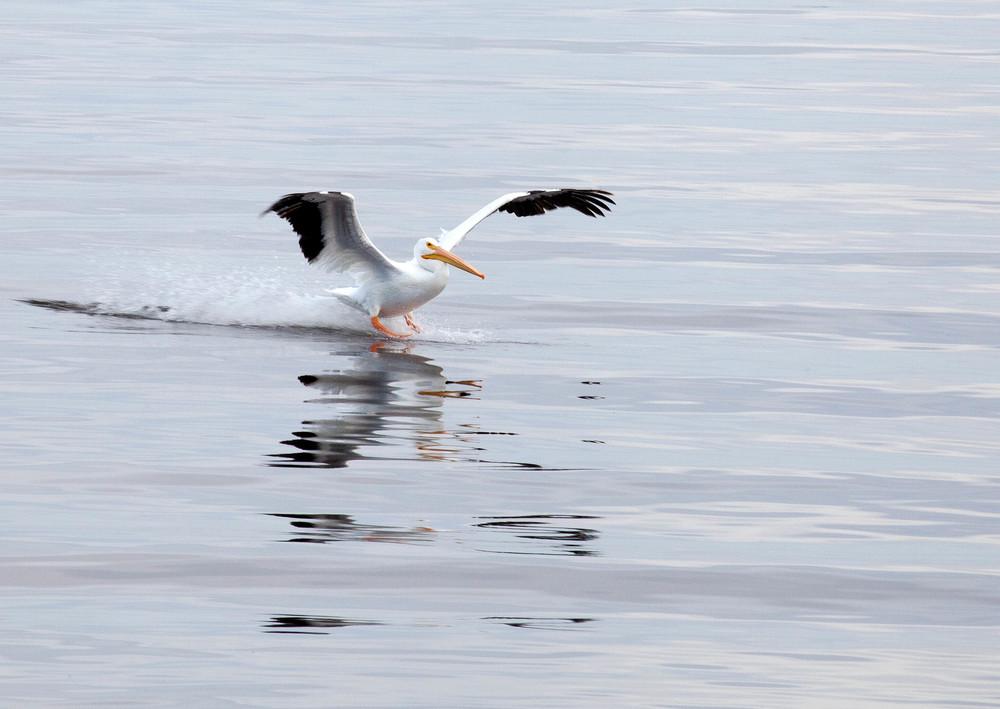 Salton Bird-7.jpg